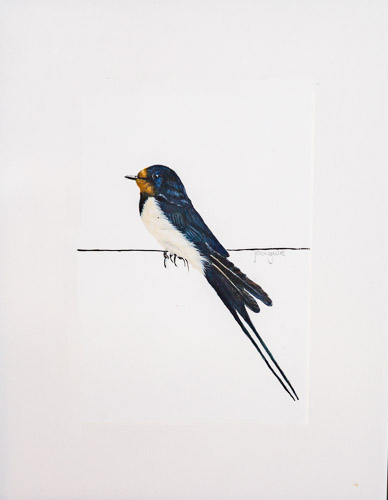 Swallow (after Gareth Watling)