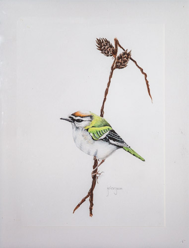 Firecrest (after Gareth Watling)
