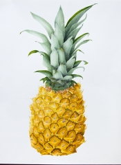 A Large Pineapple